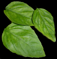 1 basil-leaves